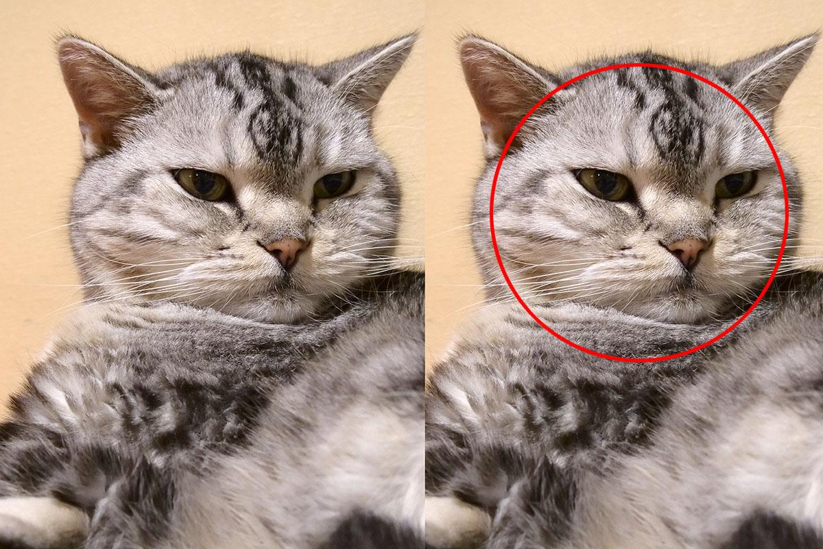 猫がかわいい理由は「丸い」から!?