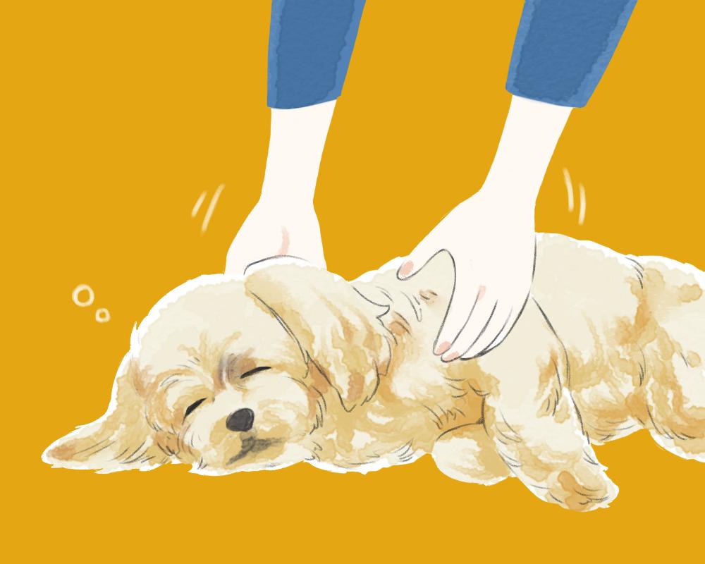 が 犬 入ら 力 ない 後ろ足