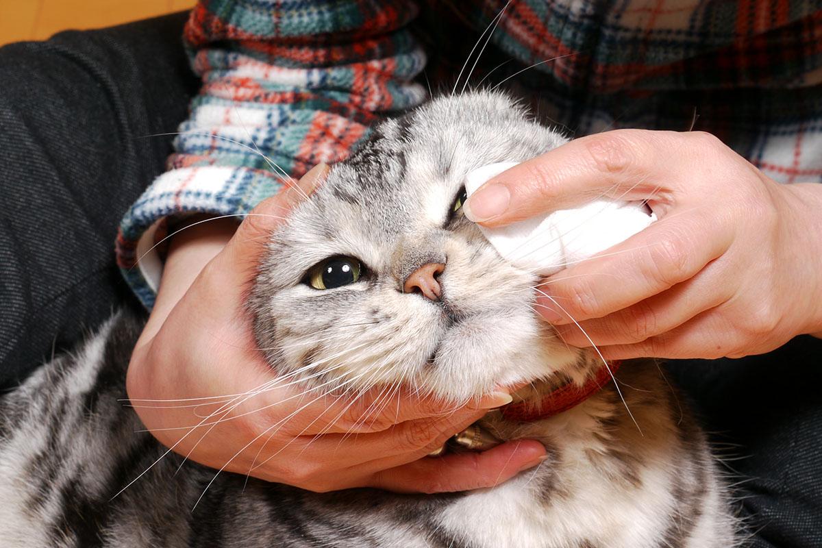 目やに 取り 方 猫