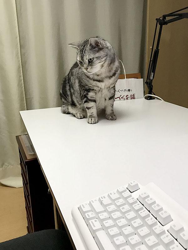 猫が何を考えているのか知りたい